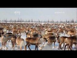 Тундра (Часть 1) | Документальный фильм о Российском севере.