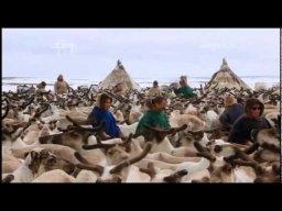 Тундра (Часть 4) | Документальный фильм о Российском севере.